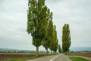 _DSC9296_Alsace